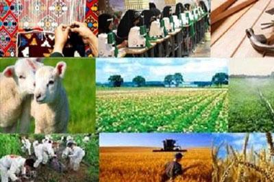 تصویب بیش از 3200 طرح اشتغالزایی روستایی در بانک سینا